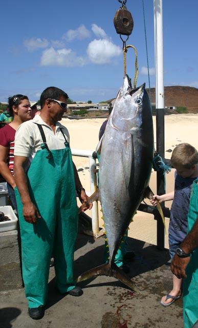ascension island spearfishing recent blog posts smsg blog