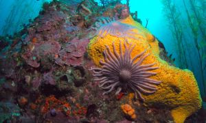 Shallow Marine Surveys Group finds high diversity on Stanley's doorstep